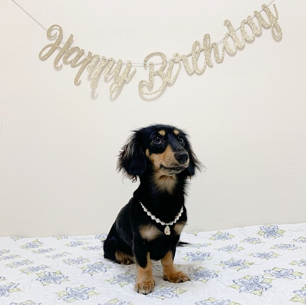 Happy first Birthday,my sweetie♡